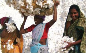 Organic cotton farmers in India don't have to worry about pesticides damaging their health. India is the largest supplier of organic cotton, accounting for 80% of global production.