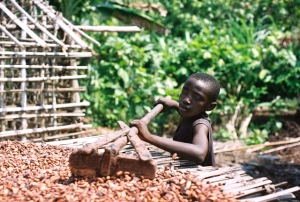 A young boy dries out cocoa beans in the Ivory Coast. Would more Fair Trade certification make it possible for him to go to school?